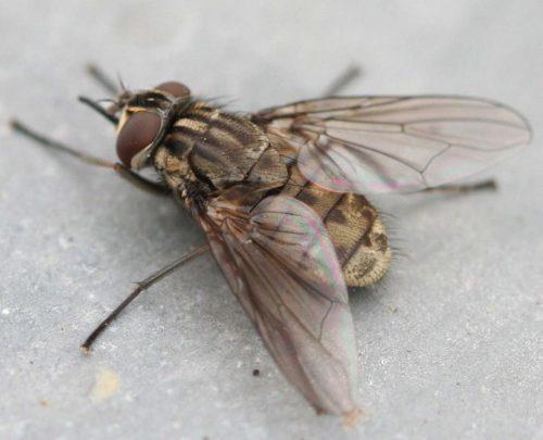 Не все мухи кусаются
