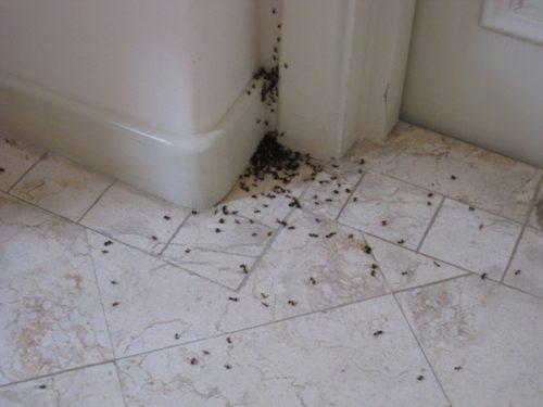 Муравьи могут оставлять экскременты по углам, что создает антисанитарные условия