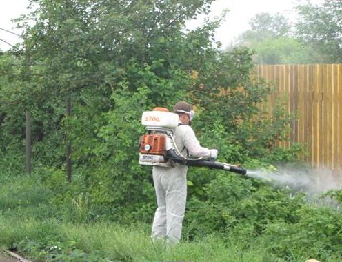 Недопустимо обрабатывать перцы инсектицидами