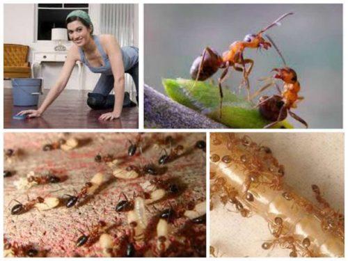 В квартире следует проводить профилактику, чтобы предотвратить появления насекомых