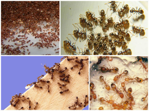 Дезориентация насекомых с применением различных методов дает хорошие результаты