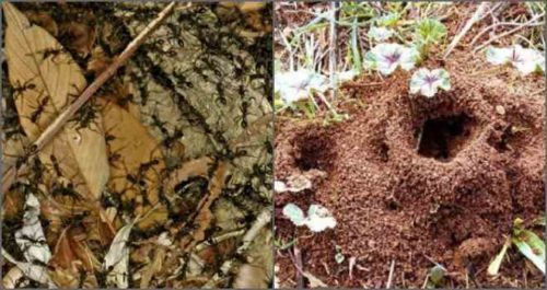 Некоторые садовники используют мочу в борьбе с насекомыми