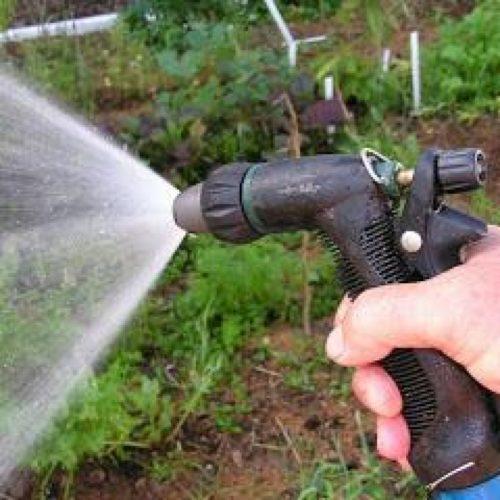 Тлю можно сбить сильным напором воды