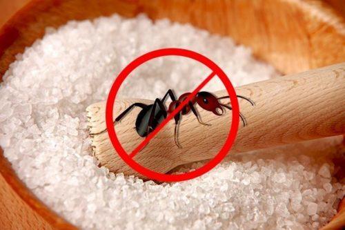 Соль вредна для муравьев