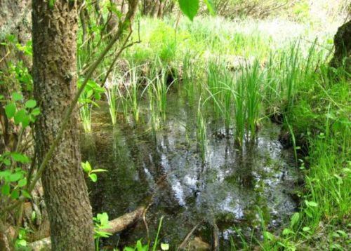 Насекомые предпочитают жить вблизи водоемов