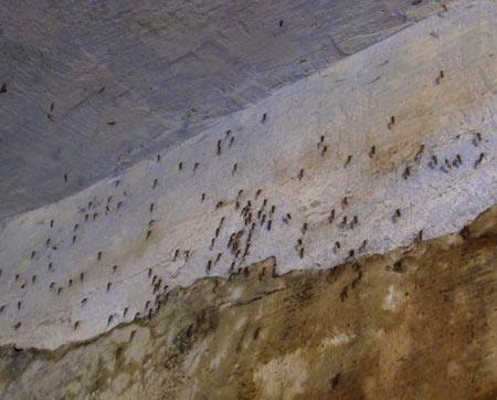 Комары живут в подвале