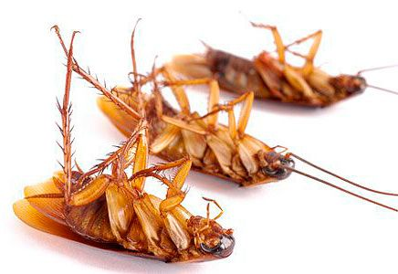 3 таракана