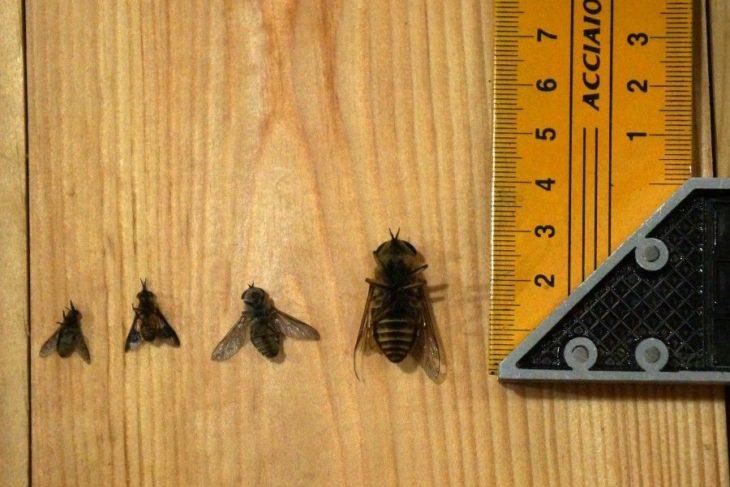 размеры насекомых