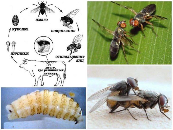 цикл размножения