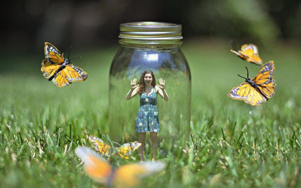 почему бабочки