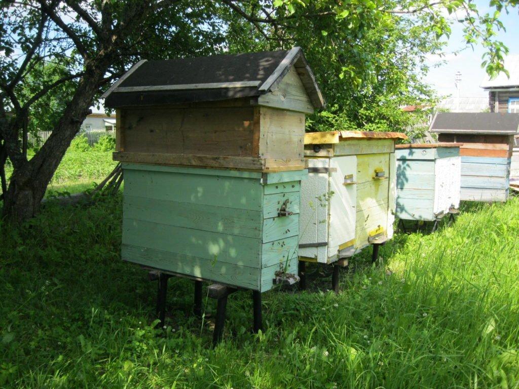 боязнь пчел и ос причины