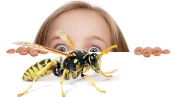 боязнь пчел и ос