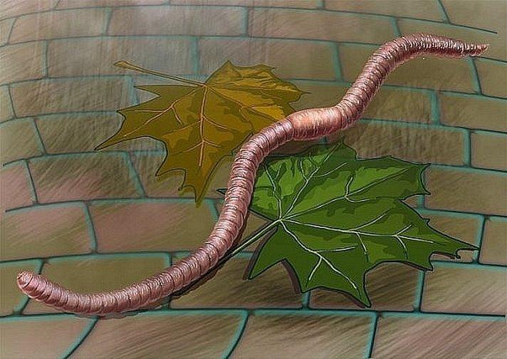 черви фобия как называется
