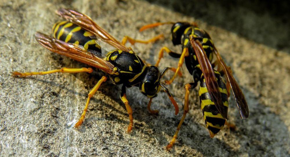 боязнь пчел и ос как лечить
