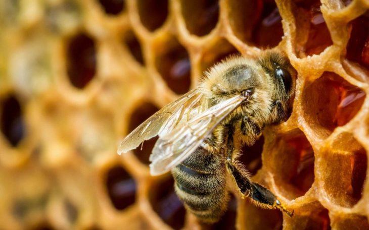 боязнь пчел