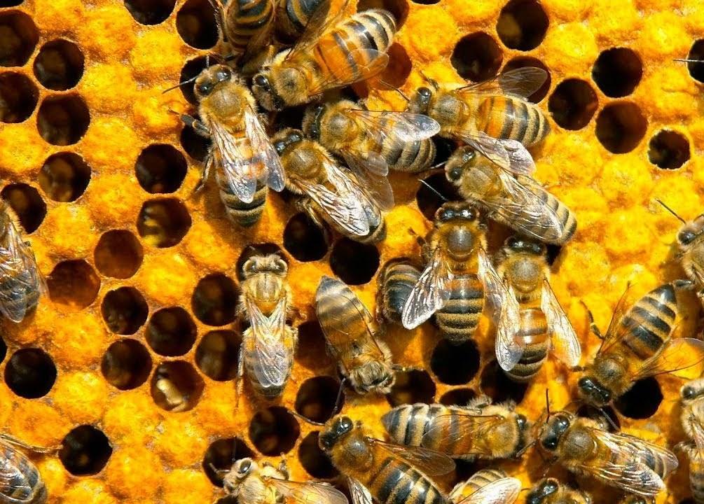 боязнь пчел и ос что делать