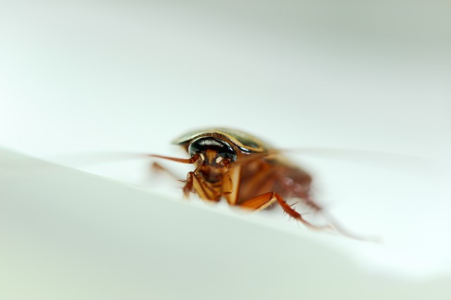 боязнь тараканов как называется